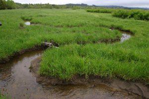 Obnovený a přirozeně meandrující potok