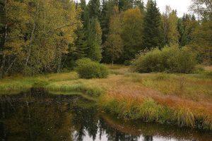 Wetlands in a natural floodplain © Iva Bufková