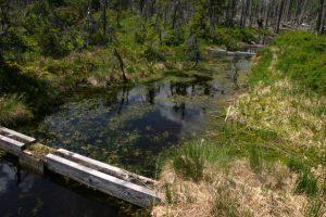Po revitalizaci je hladina podzemní vody blízko přirozenému stavu