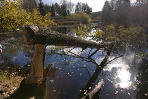 Beavers have a major impact in the formation of river basins © Iva Bufková