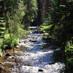 Studená Vltava - jedná z mála řek, které do Čech přitékají.