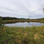 Tůňky v revitalizovaném rašeliništi jsou domovem kulíka říčního.