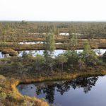 Lotyšská rašeliniště jsou o poznání rozlehlejší než ta naše šumavská.