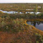 Rašeliniště o rozloze šesti tisíc hektarů, foto Iva Bufková