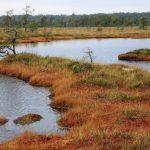 Die Schönheit der nördlichen Moore, Foto Dana Zývalová