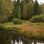 Mokřady v přirozené říční nivě © Iva Bufková