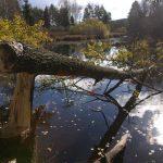 Biber haben einen großen Einfluss auf die Gestaltung von Flusseinzugsgebieten © Iva Bufková