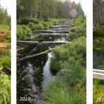 Mire development after restoration