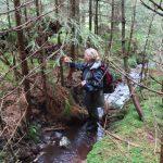 Markierung der zu fällenden Bäume. Die Durchforstung der Bestände hilft dem Torfmoos.
