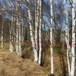 Část náletových dřevin podél kanálů se musí vyřezat.
