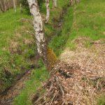 Původně zvlěný potok svedený do napřímeného kanálu