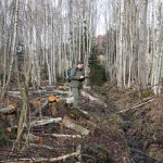 In field preparations include tree removal to allow access for light machinery