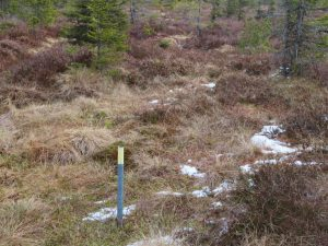 Žlutý kolík značí biomonitorační plochu. 12,5 metru okolo se pravidelně sčítají stromky, měří veškeré mrtvé dřevo a hodnotí vegetace. Takových míst jsou po celé Šumavě stovky.