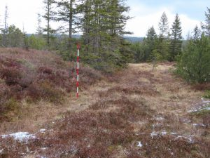 The project site Hamerská slať was partly manually extracted and the peat was used as fuel or bedding material for animals. The difference of heights between the original ground and the extracted areas is up to 2 meters.
