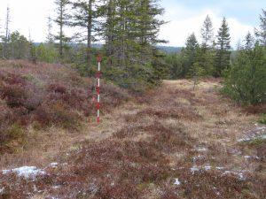 Das Moor Hamerská slať wurde teilweise von Hand abgetorft - für Treibstoff und Streu. Der Unterschied zwischen der Höhe des ursprünglichen Geländes und den gestochenen Streifen beträgt bis zwei Meter.