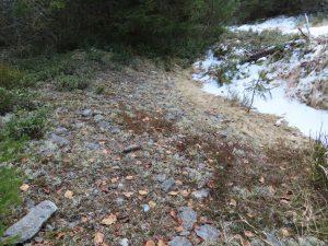 Woher kommen die Steine im Moor? Das sind keine gewöhnlichen Steine, sie enthalten Gold - es sind Seifen, zurückgeblieben nach dem Goldwaschen im Bach Hamerský potok.