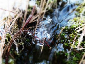 Es soll hier nicht fließen, zaubert jedoch im Winter trotzdem.