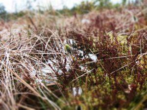 Der Frühling spielt in allen Farben. Und fleißige Wollgräser streuen Pollen.