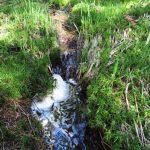 Dobře napěněný potok. Nejde o havárii – pěnění způsobují vyplavené huminové látky, což jsou vlastně výluhy z rašeliny.