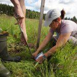 Einsetzen von Zellulose-Beuteln zur Bestimmung der Zersetzungsrate. Diese Beutel werden bis zum Herbst im Boden belassen.