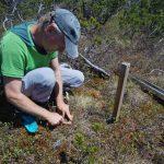 Odběr svrchní vrstvy rašeliny (0 – 10 cm) pro stanovení objemové hmotnosti rašeliny.