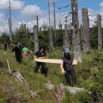 Carrying wooden boards by hand helps to lower the impact of restoration measures.