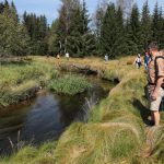 Die Dynamik des Wasserlaufs entlang der Kalten Moldau.