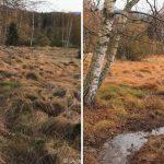 Pod Skelnou - další z obnovených potoků v pramenném svahu protéká drobnými mokřady. Vysychání je zastaveno.