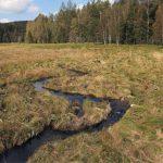 Malý Bor - pod pramenným svahem v nivě řeky Křemelné se voda navrátila do vysychající rašelinné louky.