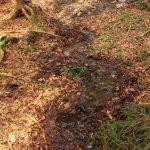"""Nové Údolí - odvodněná lesní prameniště nad Spáleným luhem dlouhou dobu vysychala. Po zrušení kanálů jsme znovuzrozeným potokům jen """"odkrývali"""" jejich původní trasy."""