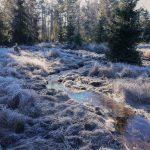 """Nové Údolí - v nivě Studené Vltavy pokračovalo odvodnění kolem """"signálky"""". Vpravo na fotografii je vidět zablokovaná rýha, hlavní roli pak hraje obnovený potok v zimním hávu."""