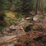 """Gerlova Huť - z hluboké rýhy jsme metodou tzv. vymělčení dostali lesní potok opět k povrchu, rozvlnili ho a zamezili tak dalšímu vysychání původně rašelinných a podmáčených smrčin. Do kanálu byly příčně instalovány """"pohřbené"""" hrázky."""