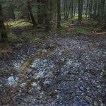 Devítka - další z malých lesních potůčků