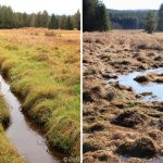 Nové Údolí project site - the same stream before and after restoration