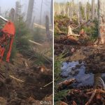 Gayerruck project site - restoration in bog woodlands. Drainage ditches were replaced by small streams.