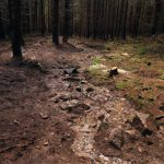 Stožecká project site - shallow and wavy stream instead of a deep drainage ditch in a waterlogged forest.