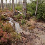 Smrkový vrch project site - restored stream in bog woodlands