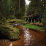 Revitalizovaný potok Hučina v lesním porostu