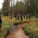 Between the spontaneously regenerating alder trees